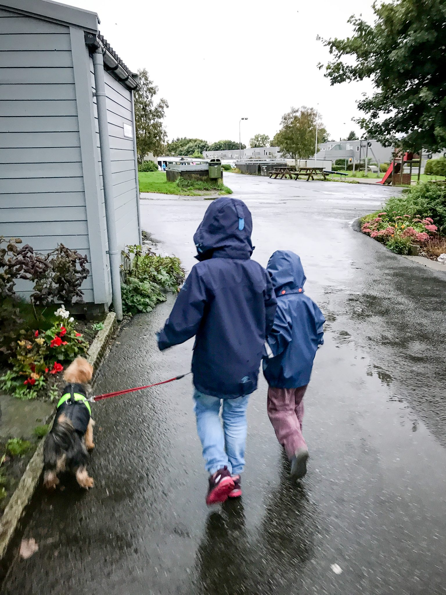 Two young children walking a small dog in the rain